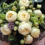 """ვარდი """"WEDDING PIANO"""" ( Hybrid Tea ROSE WEDDING PIANO) ზრდასრული მცენარე კონტეინერით"""