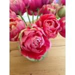 """ტიტა  """"Renown Unique"""" (Tulips Renown Unique) ბოლქვი 8 ცალი"""