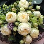 """ვარდი """"LEMON ROKOKO"""" ( ROSE LEMON ROKOKO) ზრდასრული მცენარე კონტეინერით"""