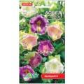 კობეა, ფერთა ნაკრები (Cobaea scandens, mix) თესლი