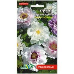 იორდასალამი (ხე-პიონი), ფერთა ნაკრები (Paeonia suffruticosa) თესლი